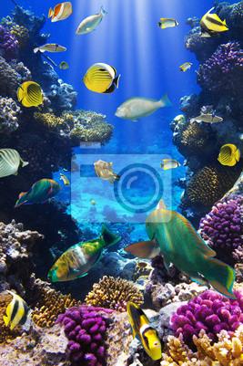 Naklejka Koral kolonii koralowców i ryb