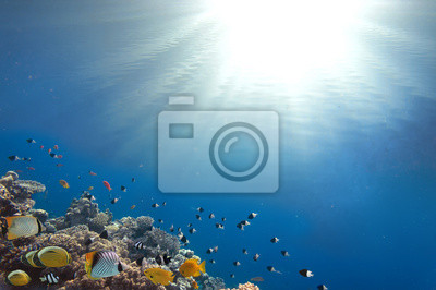 Naklejka Koral rafa i tropikalna ryba w Sunlight