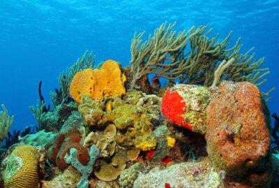 Naklejka Korale do powierzchni, Cozumel, Meksyk