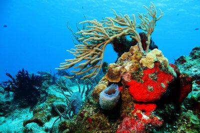 Naklejka Korale przeciwko Blue Water, Cozumel, Meksyk