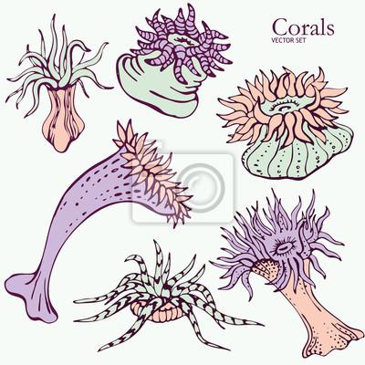 Korale Wektor zestaw