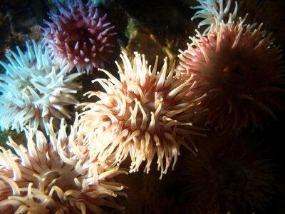Naklejka Koralle 03