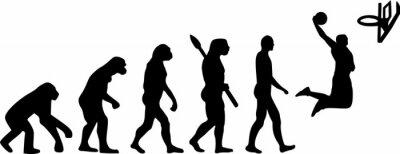 Koszykówka Evolution