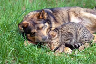 Kot i pies relaks na trawie