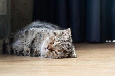 Naklejka kot kotek spać w domu na podłodze z drewna