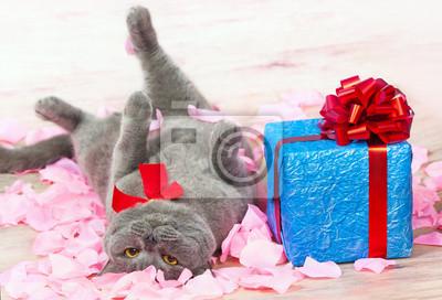 Kot leżący na płatki róż w pobliżu niebieskim prezent z
