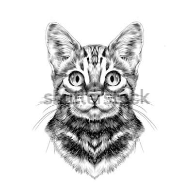 Naklejka kot rasy Bengal zauważył paski głowy symetryczne szkic grafiki wektorowej czarno-biały rysunek