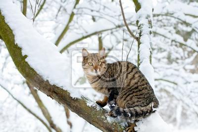Kot siedzi na ośnieżone drzewa