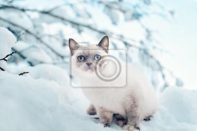 Kot siedzi w śniegu