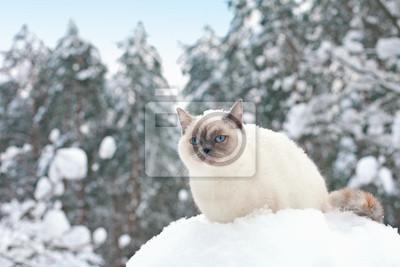 Kot siedzi w śniegu w lesie