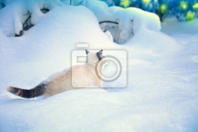 Kot spaceru w śniegu