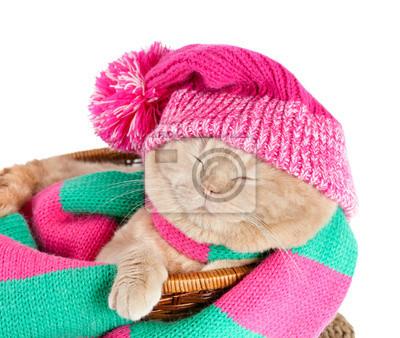 Kot w kapeluszu i szalik śpi w koszu