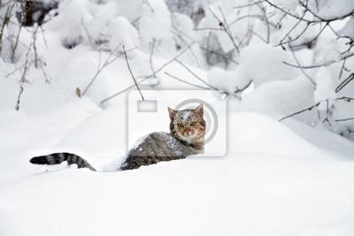 Kot w śniegu