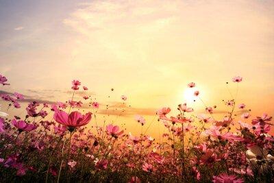 Naklejka Krajobraz charakter tle pięknym różowym i czerwonym kwiatem dziedzinie kosmosu z zachodem słońca. odcienia koloru rocznik