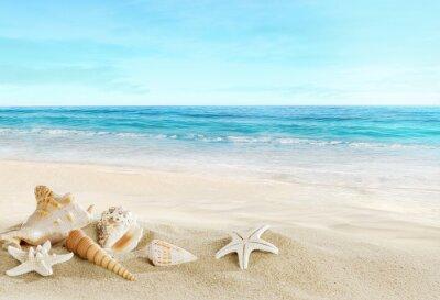 Naklejka Krajobraz z muszli na tropikalnej plaży