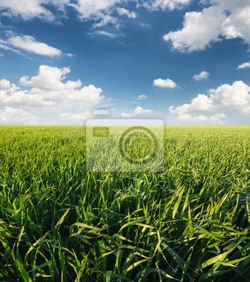 Krajobrazu rolniczego w okresie letnim