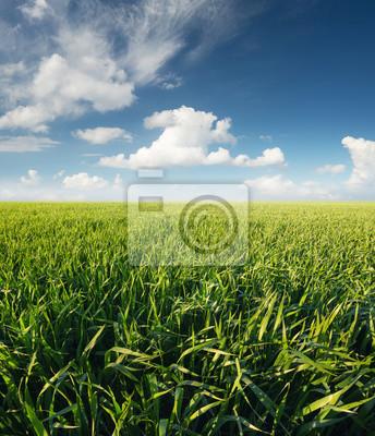 Krajobrazu rolniczego w okresie letnim ..
