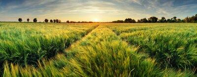 Naklejka Krajobrazu wiejskiego z pola pszenicy na zachód słońca