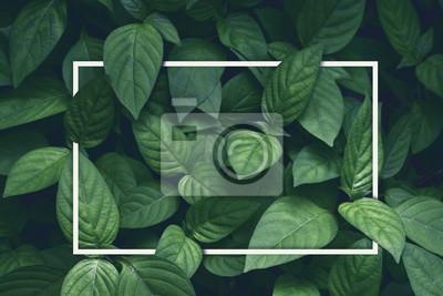 Naklejka kreatywny układ, zielone liście z białą kwadratową ramką, płaskie lay, na kartę reklamową lub zaproszenie