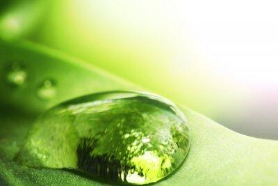 Naklejka Kropla wody na liściu