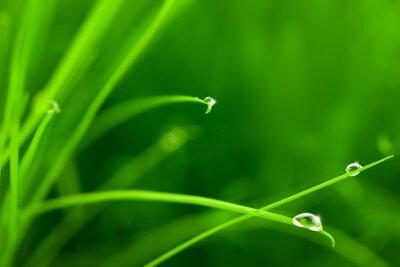 Naklejka Krople wody na trawie z Sparkle / kopia przestrzeń