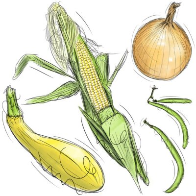 Naklejka Kukurydza, cebula, squash, i zielonej fasoli