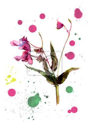Kwiat Balsam, Jewelweed.