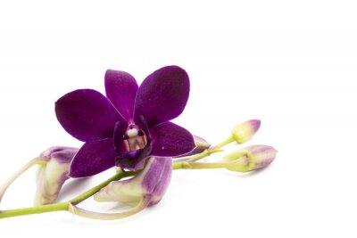Naklejka Kwiat fioletowy storczyk jest izolować na whte
