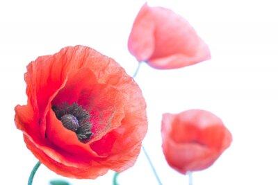 Naklejka Kwiat maku bliska