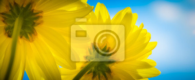 Kwiat radość
