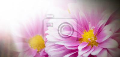 Kwiat życia