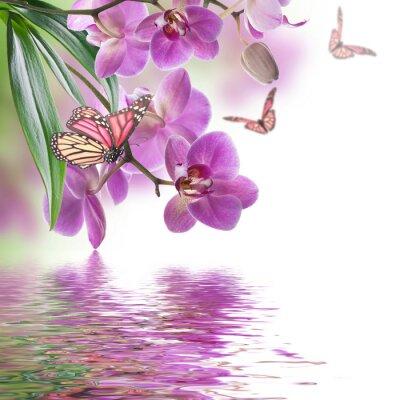 Naklejka Kwiatów tle z tropikalnych storczyków i motyli
