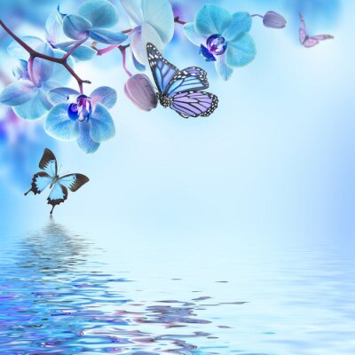 Kwiatów tle z tropikalnych storczyków i motyli