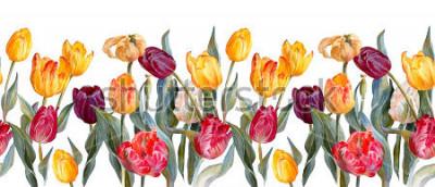 Naklejka Kwiatowy poziomej granicy. Kolorowe tulipany na białym tle. Ilustracja botaniczna. Malarstwo akwarelowe.