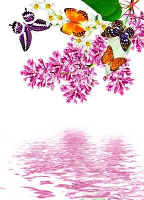 Naklejka kwiaty bzu