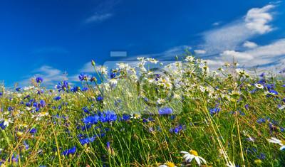 Kwiaty i niebo.