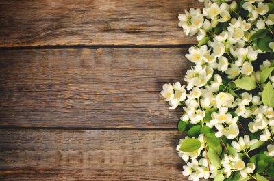 Naklejka Kwiaty jaśminu