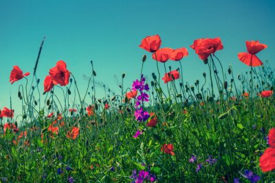 Naklejka Kwiaty maku na tle nieba