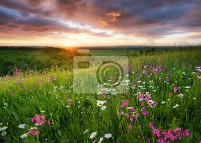 Kwiaty na halnym polu podczas wschodu słońca. Piękny naturalny krajobraz w okresie letnim