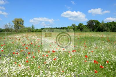 Kwiaty na polu