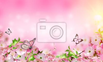 Kwiaty tła z niesamowite wiosny sakura z motyli. Kwiaty wiśni.
