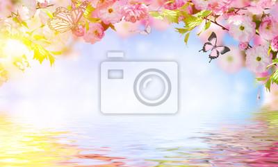 Kwiaty w tle z niesamowitą wiosną sakura z motylami. Kwiaty wiśni.
