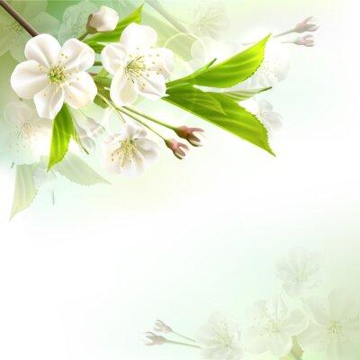 Naklejka Kwitnąca gałąź drzewa z białymi kwiatami