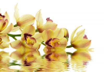 Naklejka Kwitnąca orchidea