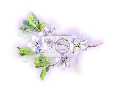 Kwitnące białe kwiaty drzewa wiśni sakura, japoński-akwarela