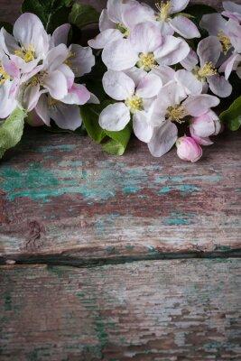 Naklejka Kwitnące gałęzie jabłoni