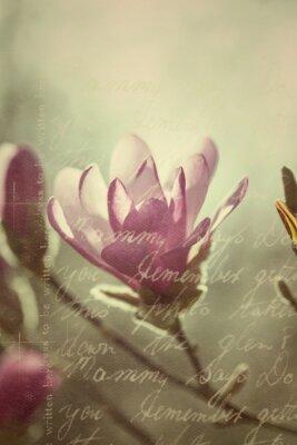 Naklejka Kwitnienie magnolia różowy w stylu vintage