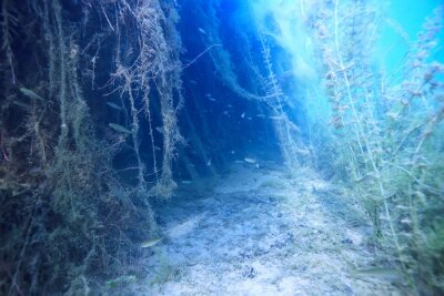 Naklejka lake underwater landscape abstract / blue transparent water, eco nature protection underwater