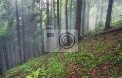 Las jako tło. Piękny naturalny krajobraz w wiosna czasie