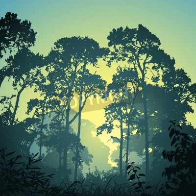 Naklejka Las krajobraz z drzew i zachód słońca